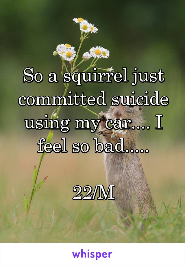 So a squirrel just committed suicide using my car.... I feel so bad.....  22/M