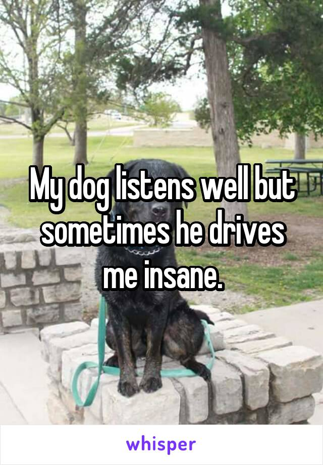 My dog listens well but sometimes he drives me insane.
