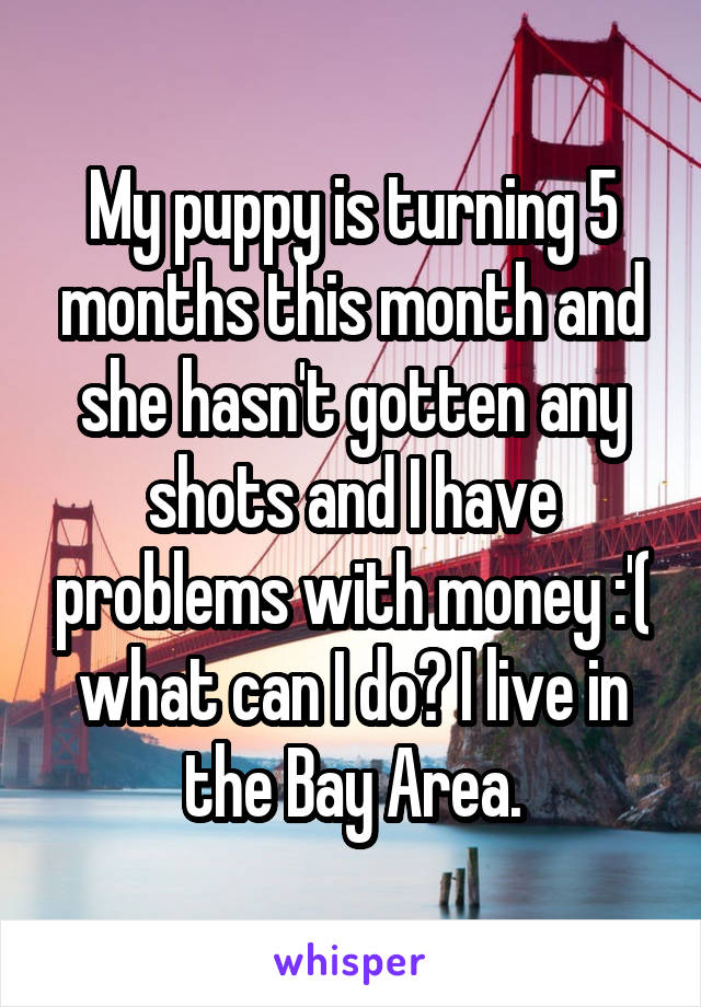 My puppy is turning 5 months this month and she hasn't gotten any shots and I have problems with money :'( what can I do? I live in the Bay Area.