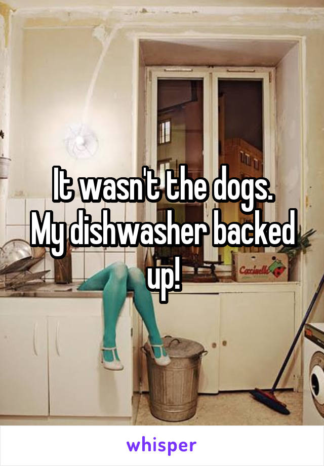 It wasn't the dogs. My dishwasher backed up!