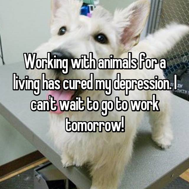 Working with animals for a living has cured my depression. I can't wait to go to work tomorrow!