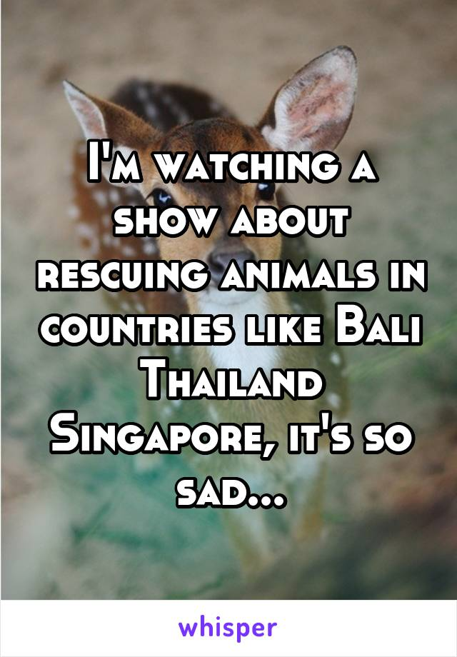 I'm watching a show about rescuing animals in countries like Bali Thailand Singapore, it's so sad...