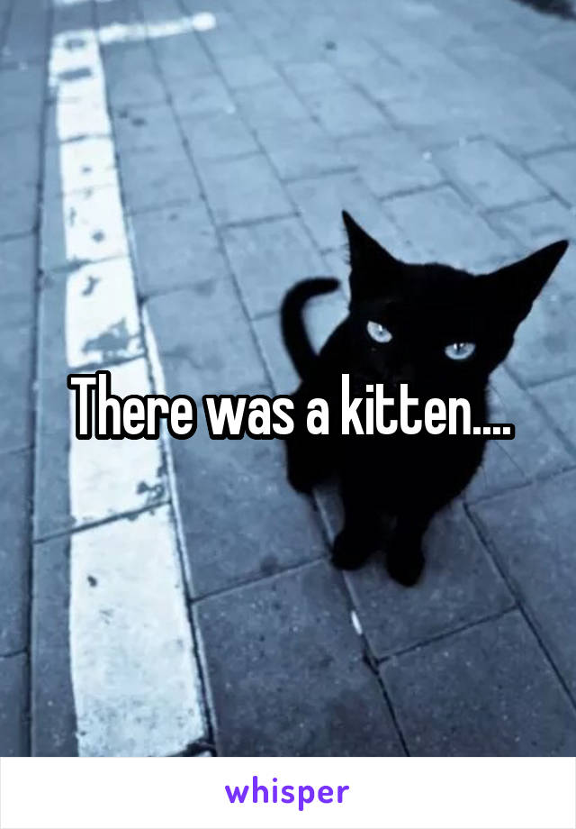 There was a kitten....