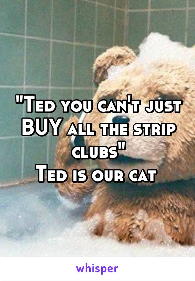 """""""Ted you can't just BUY all the strip clubs"""" Ted is our cat"""