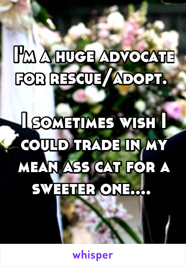 I'm a huge advocate for rescue/adopt.   I sometimes wish I could trade in my mean ass cat for a sweeter one....