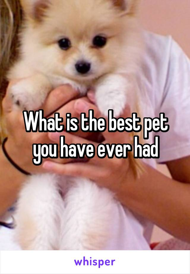 What is the best pet you have ever had