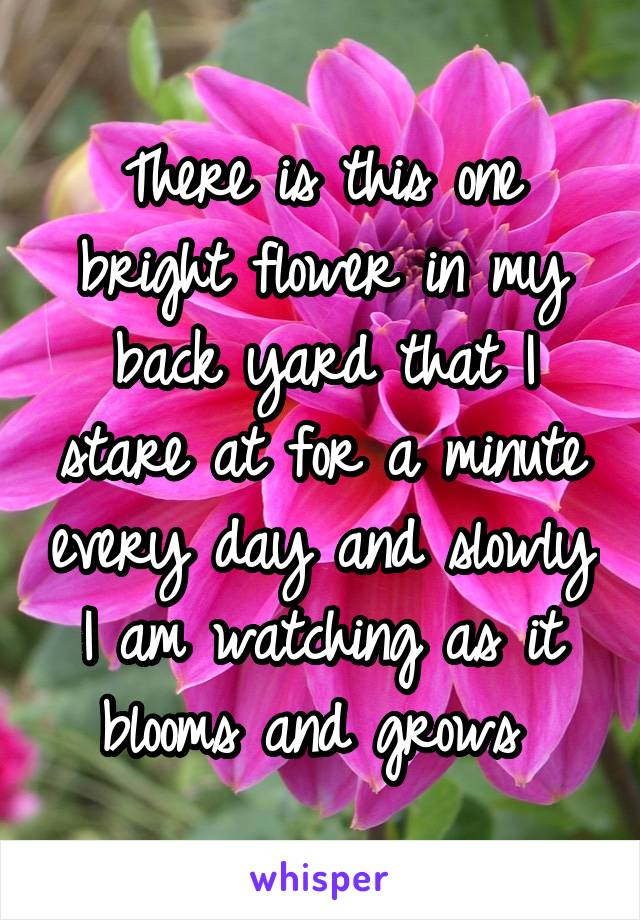 There is this one bright flower in my back yard that I stare at for a minute every day and slowly I am watching as it blooms and grows