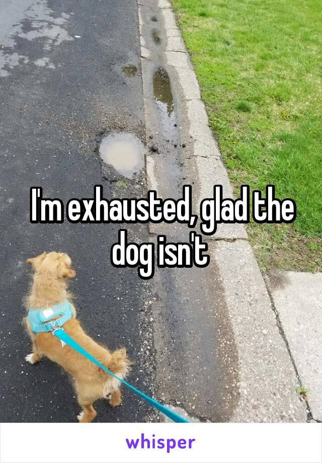 I'm exhausted, glad the dog isn't
