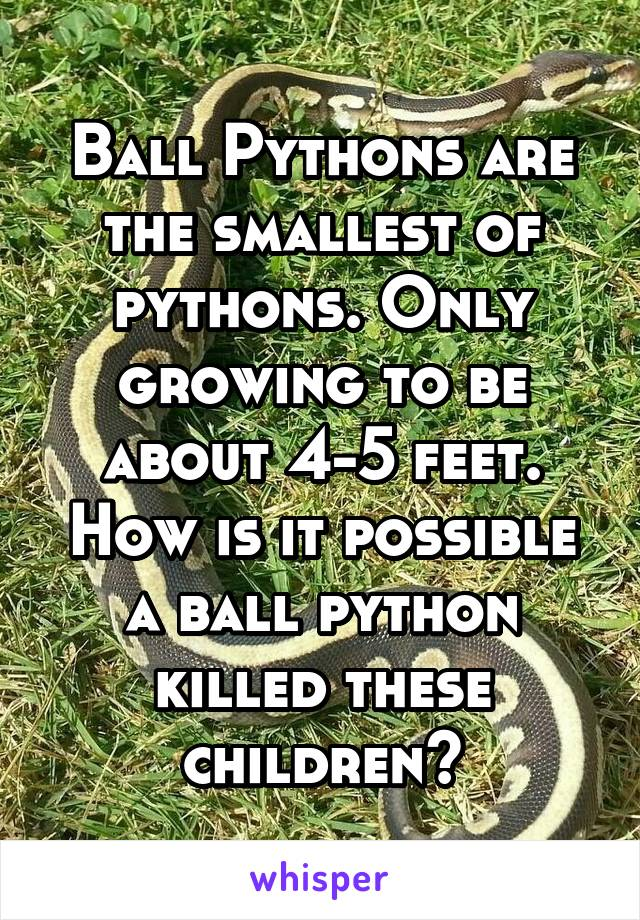 Ball Pythons are the smallest of pythons  Only growing to be