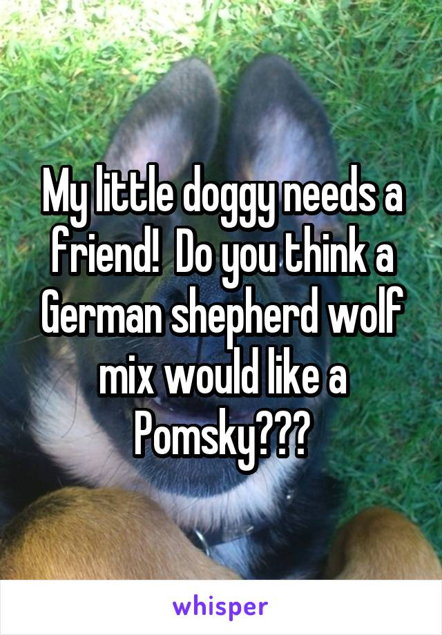 My little doggy needs a friend!  Do you think a German shepherd wolf mix would like a Pomsky???