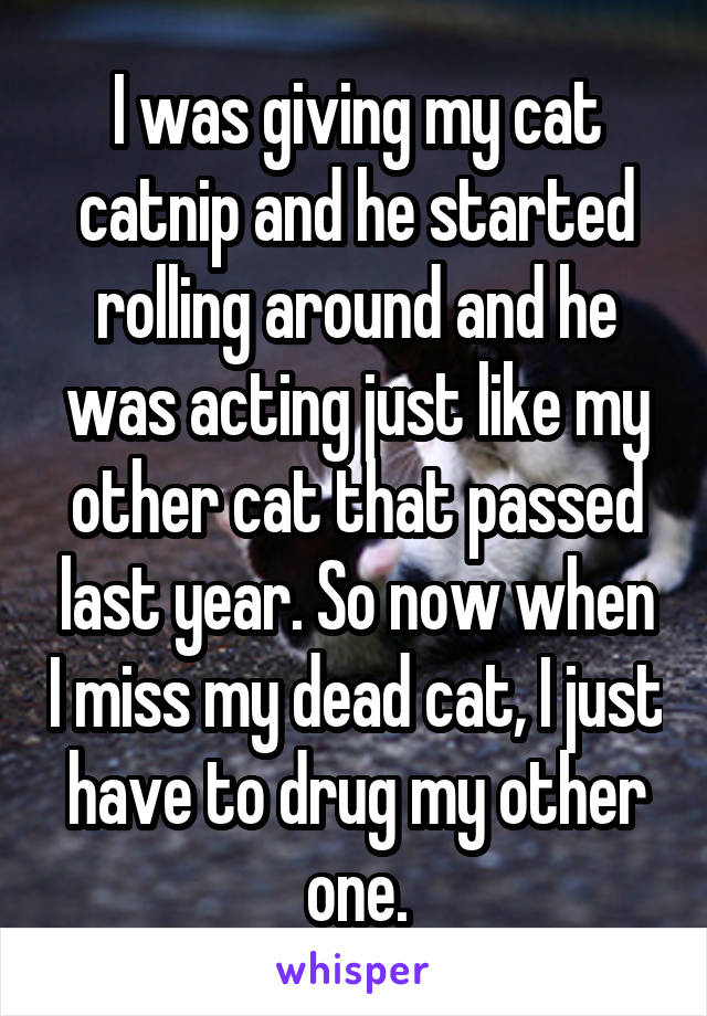 I was giving my cat catnip and he started rolling around and he was acting just like my other cat that passed last year. So now when I miss my dead cat, I just have to drug my other one.