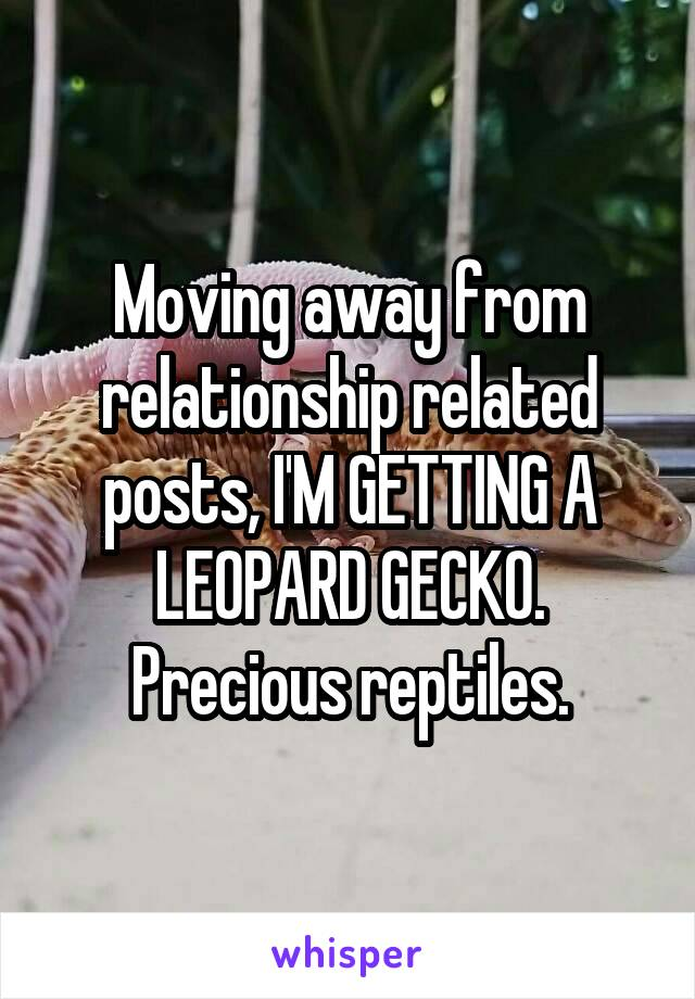Moving away from relationship related posts, I'M GETTING A LEOPARD GECKO. Precious reptiles.