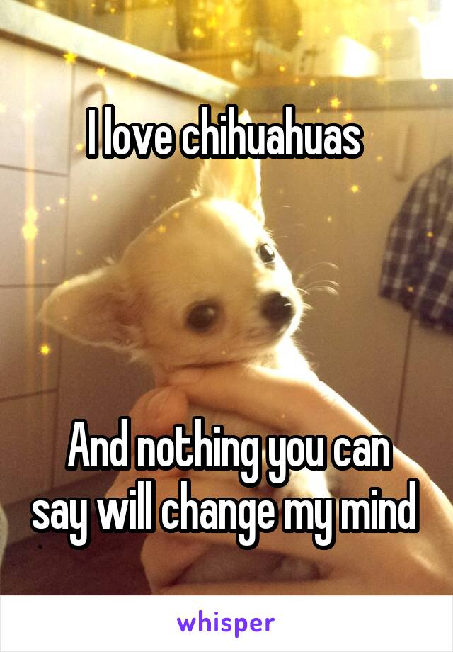 I love chihuahuas      And nothing you can say will change my mind
