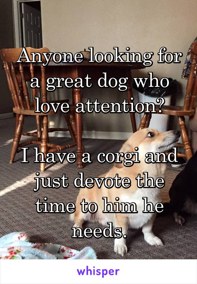 Anyone looking for a great dog who love attention?  I have a corgi and just devote the time to him he needs.