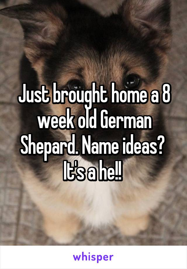 Just brought home a 8 week old German Shepard. Name ideas?  It's a he!!