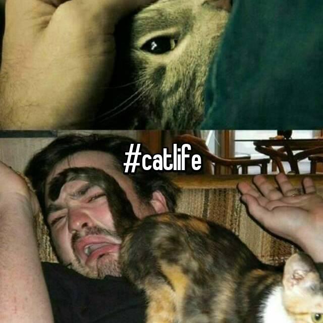 #catlife