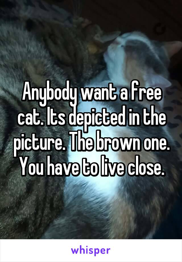 Anybody want a free cat. Its depicted in the picture. The brown one. You have to live close.