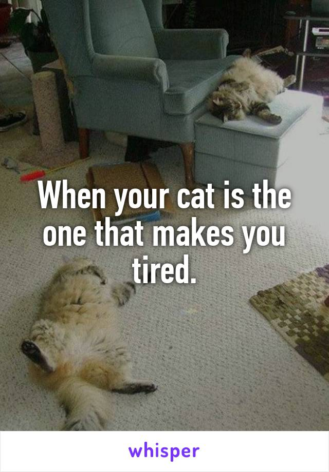 When your cat is the one that makes you tired.