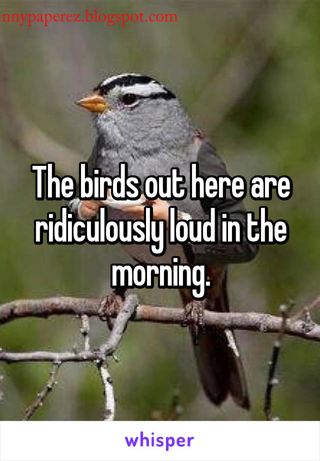The birds out here are ridiculously loud in the morning.