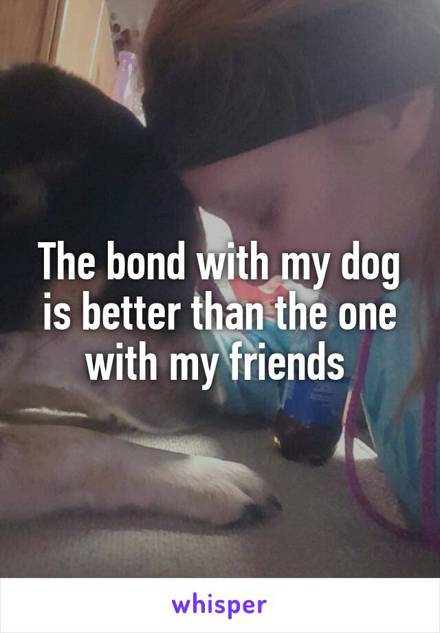 The bond with my dog is better than the one with my friends