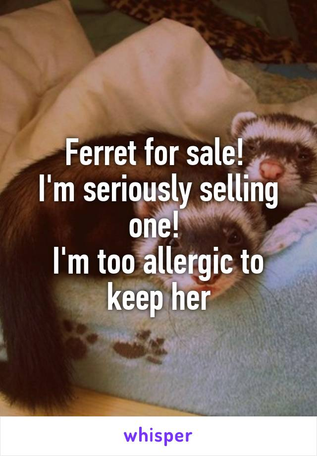 Ferret for sale!  I'm seriously selling one!  I'm too allergic to keep her