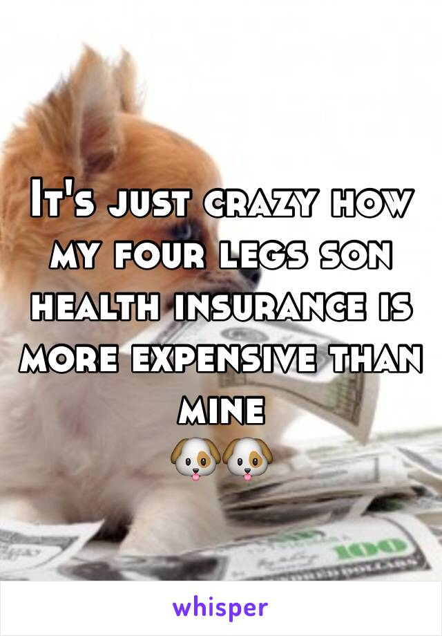 It's just crazy how my four legs son health insurance is more expensive than mine  🐶🐶