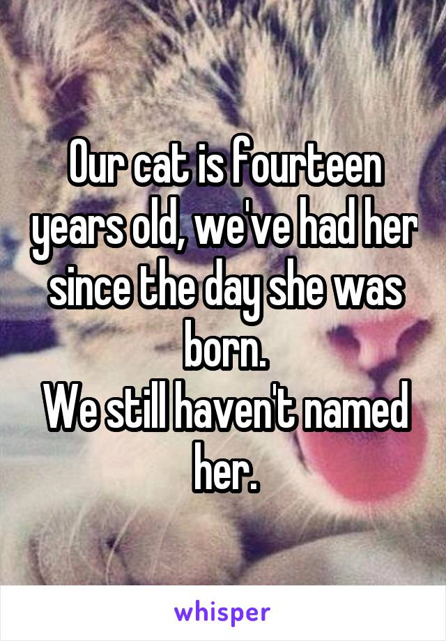 Our cat is fourteen years old, we've had her since the day she was born. We still haven't named her.