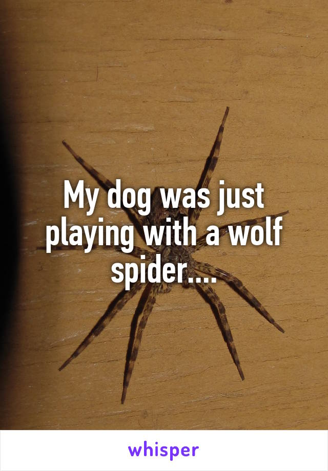 My dog was just playing with a wolf spider....