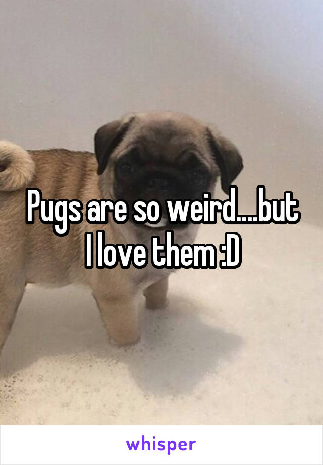 Pugs are so weird....but I love them :D