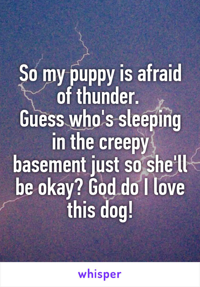 So my puppy is afraid of thunder.  Guess who's sleeping in the creepy basement just so she'll be okay? God do I love this dog!
