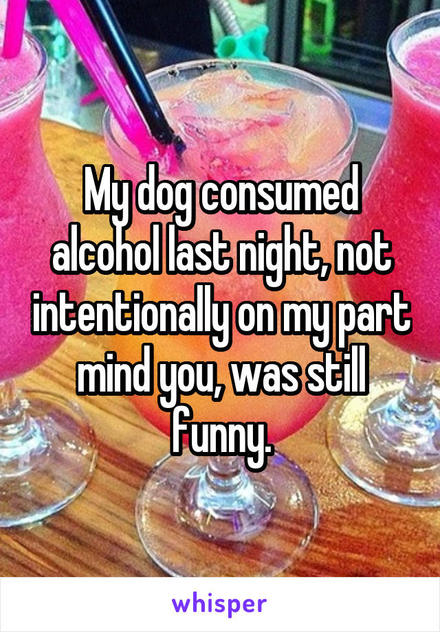 My dog consumed alcohol last night, not intentionally on my part mind you, was still funny.