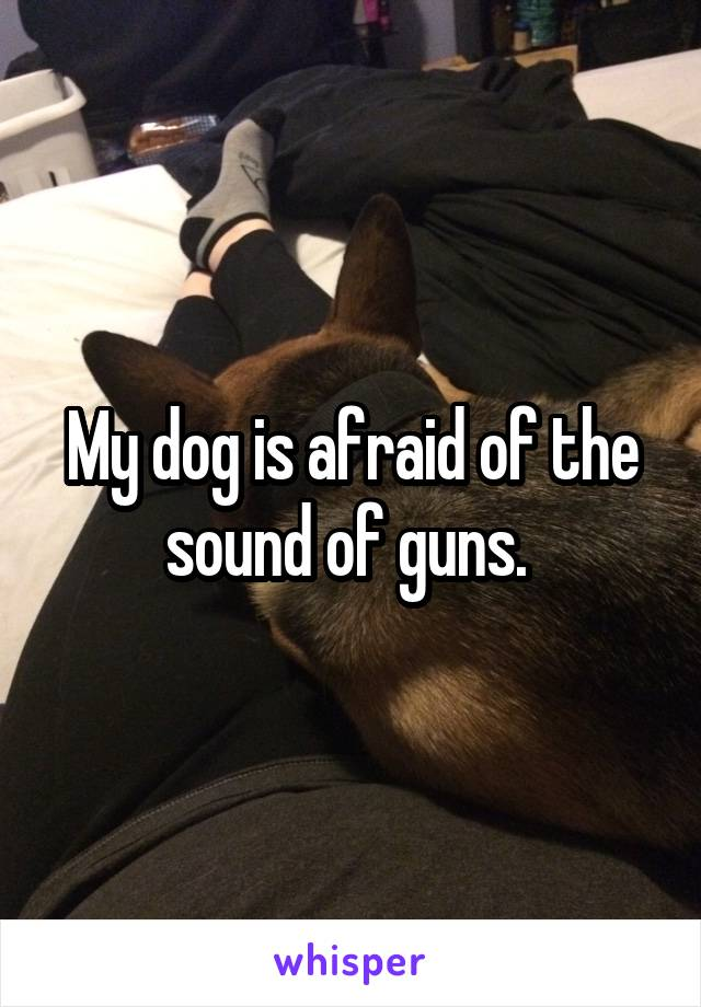 My dog is afraid of the sound of guns.