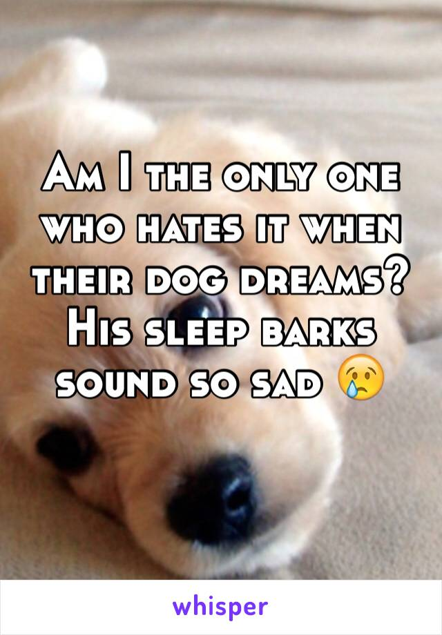 Am I the only one who hates it when their dog dreams? His sleep barks sound so sad 😢