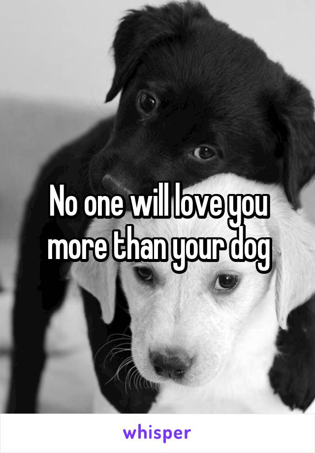 No one will love you more than your dog