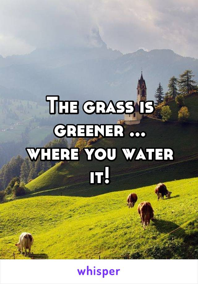 The grass is greener ... where you water it!