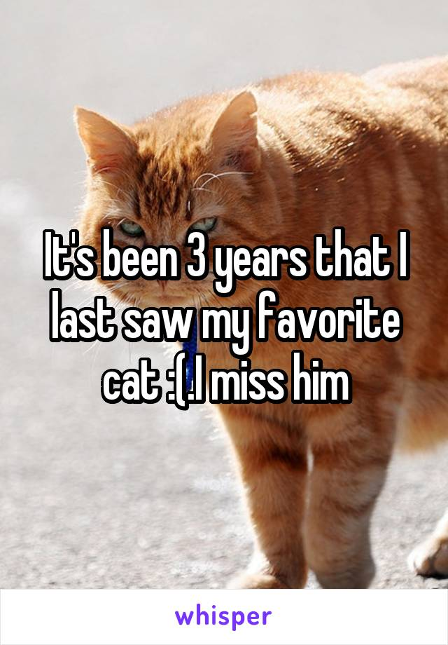 It's been 3 years that I last saw my favorite cat :(.I miss him
