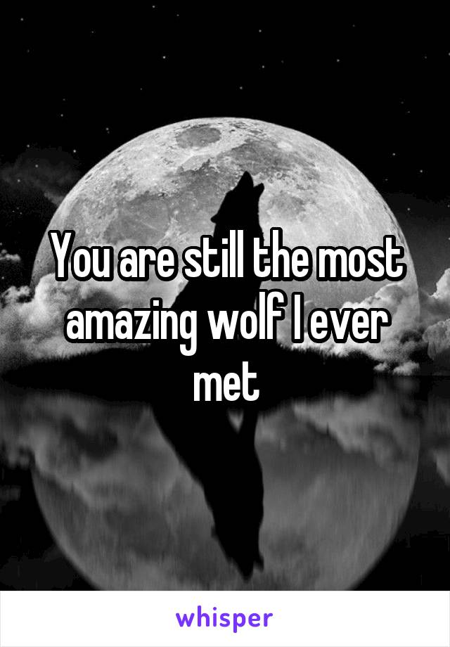You are still the most amazing wolf I ever met