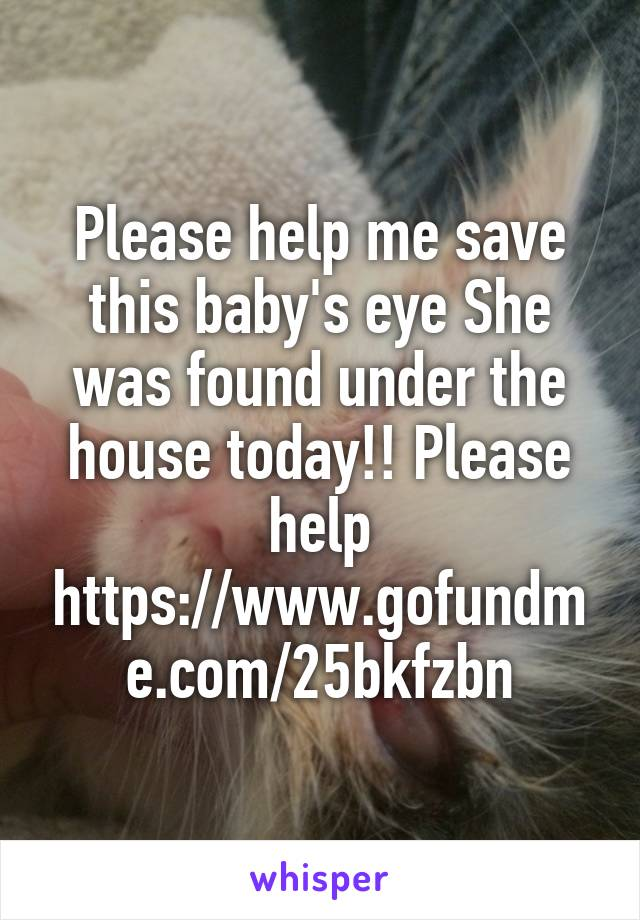 Please help me save this baby's eye She was found under the house today!! Please help https://www.gofundme.com/25bkfzbn