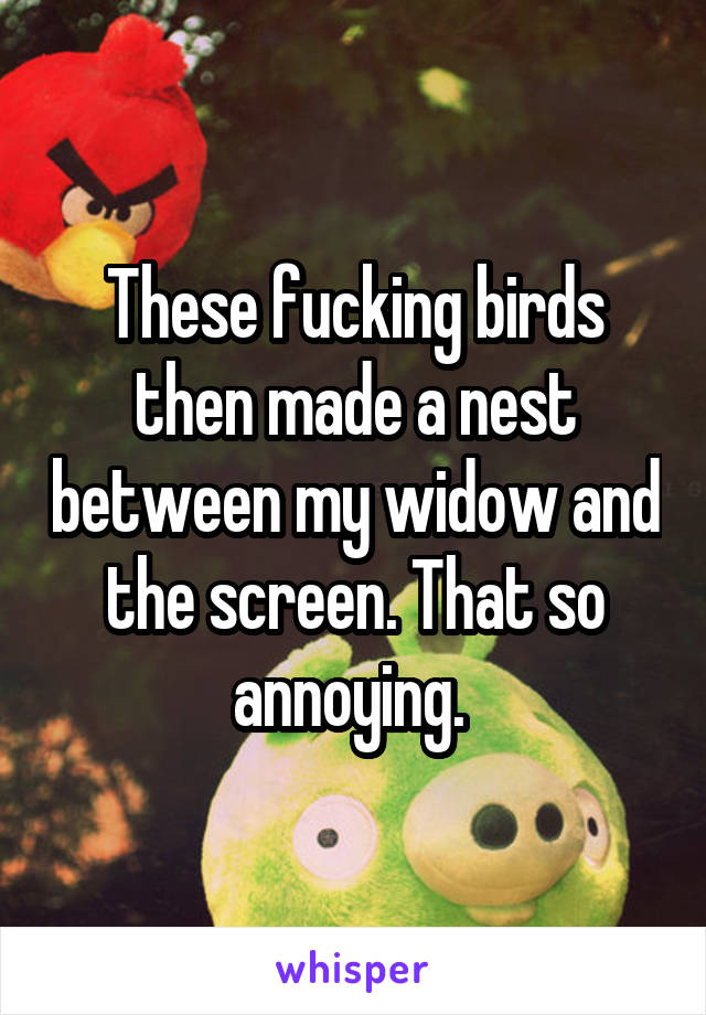 These fucking birds then made a nest between my widow and the screen. That so annoying.