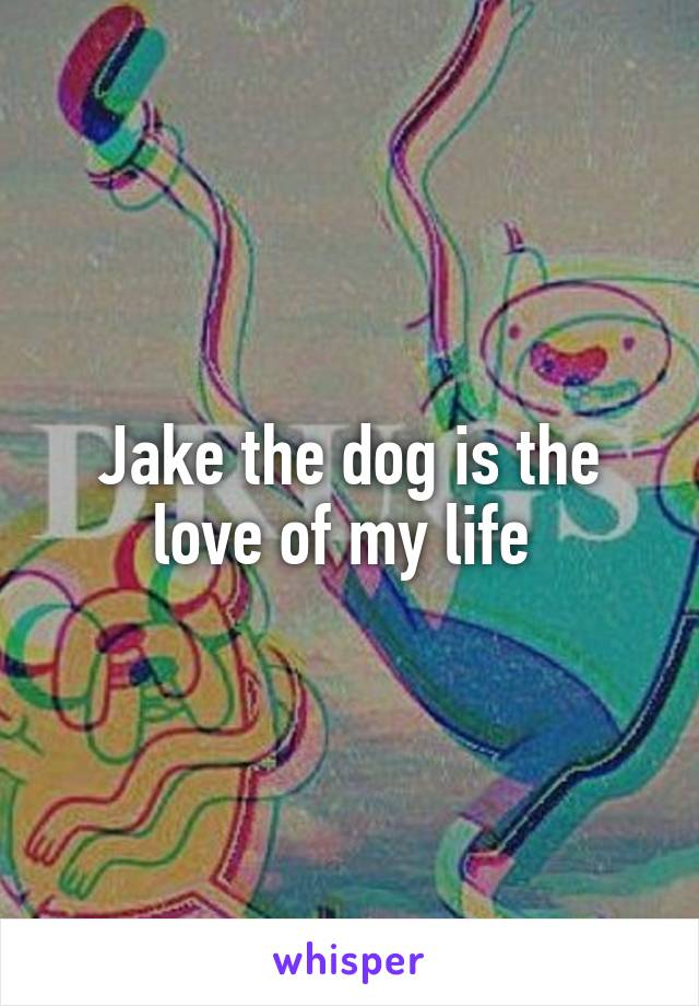 Jake the dog is the love of my life