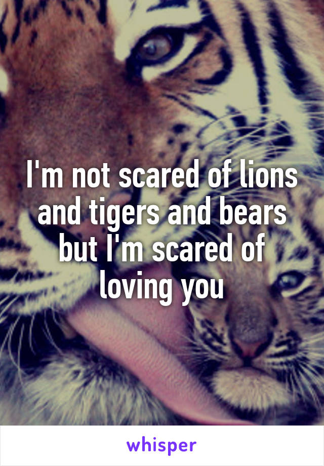 I'm not scared of lions and tigers and bears but I'm scared of loving you