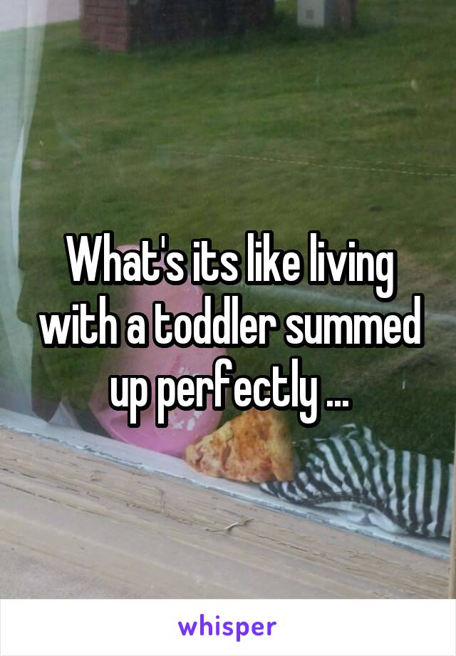 What's its like living with a toddler summed up perfectly ...