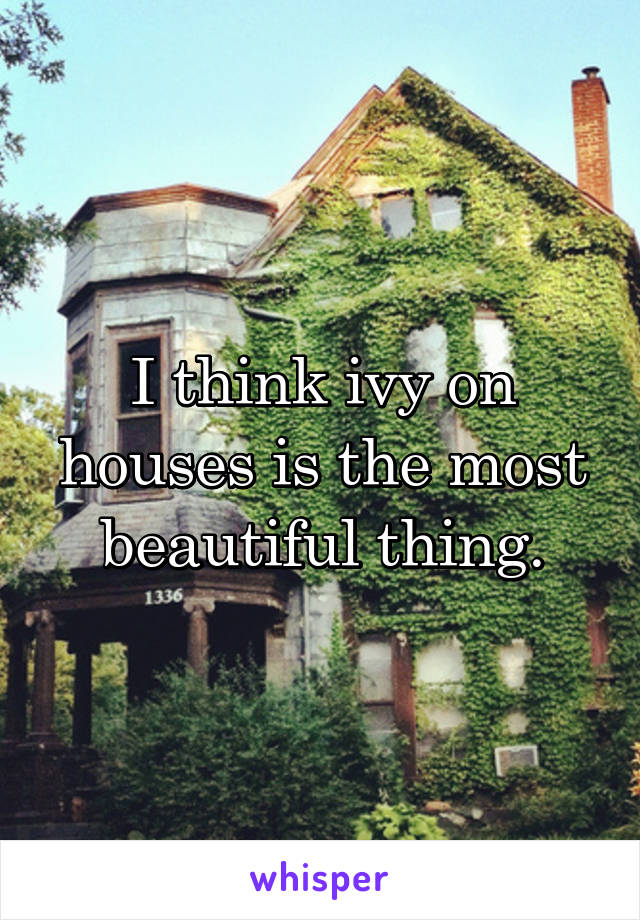 I think ivy on houses is the most beautiful thing.