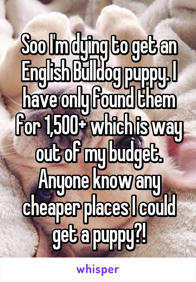 Soo I'm dying to get an English Bulldog puppy. I have only found them for 1,500+ which is way out of my budget. Anyone know any cheaper places I could get a puppy?!
