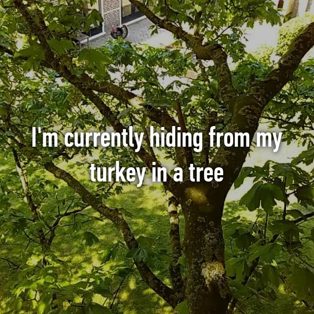 I'm currently hiding from my turkey in a tree