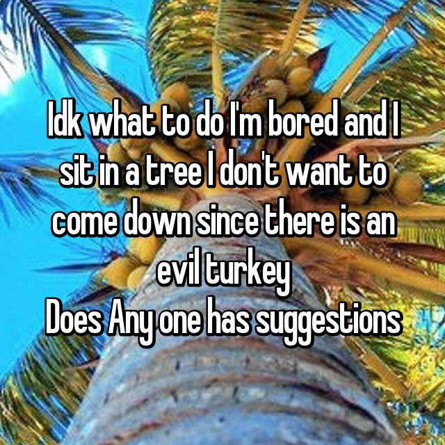 Idk what to do I'm bored and I sit in a tree I don't want to come down since there is an evil turkey Does Any one has suggestions
