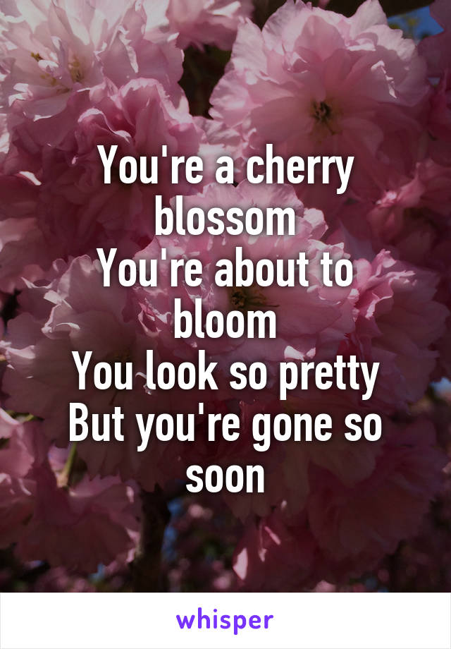 You're a cherry blossom You're about to bloom You look so pretty But you're gone so soon
