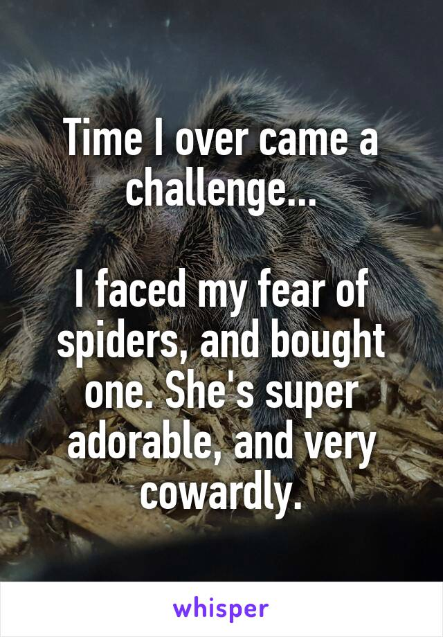 Time I over came a challenge...  I faced my fear of spiders, and bought one. She's super adorable, and very cowardly.