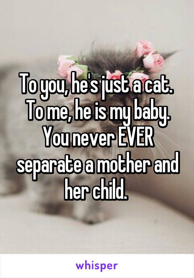 To you, he's just a cat.  To me, he is my baby. You never EVER separate a mother and her child.