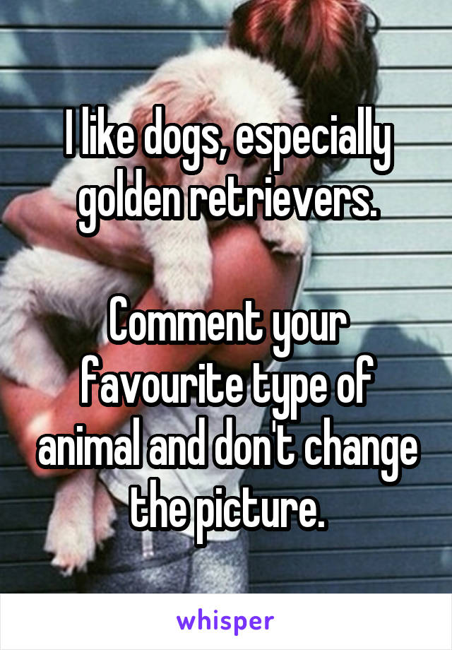 I like dogs, especially golden retrievers.  Comment your favourite type of animal and don't change the picture.